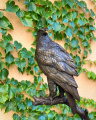 Bronzová socha orla mořského